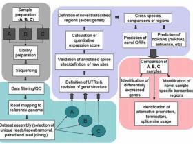 转录组测序(RNA-seq)技术