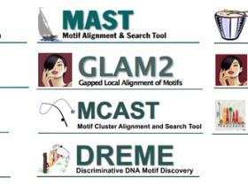 MEME:基于motif的序列分析工具