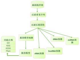 基因组注释分析主要包括哪些内容 ?