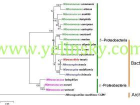 MEGA构建系统进化树的步骤