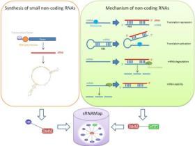 sRNAMAP:细菌small noncoding RNA数据库