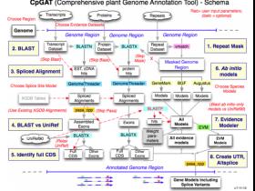CpGAT:基因组自动注释pipeline